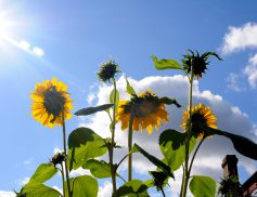 Nature Inspires – To Entrepreneurs